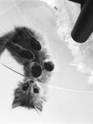 Kitten on a black-and-white photo